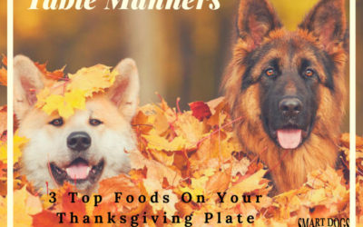 Table Manners – Holiday Safety for Your Dog