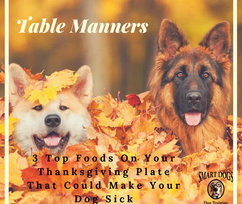 Table Manners for your Dog