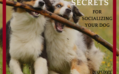 3 Must Know Secrets for Successful Dog Socialization