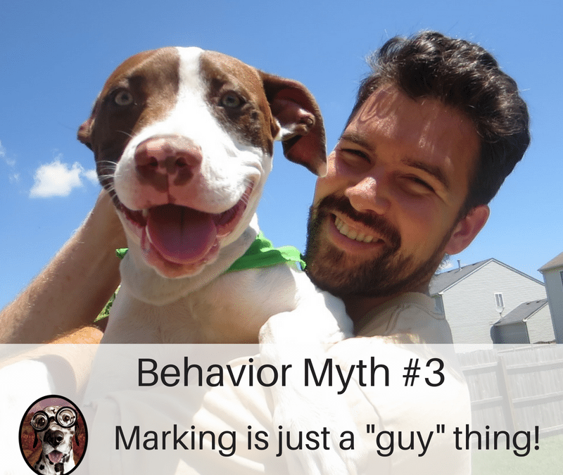 Why Does My Dog do That? Understanding Marking Behavior