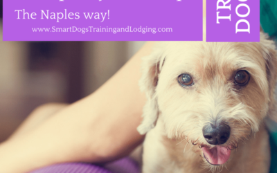 Pampering your Pet the Naples Way!