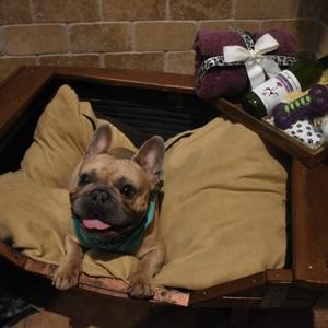 Dog-Boarding-Luxury-Kennel-7