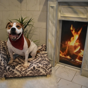 Dog-Boarding-Luxury-Kennel-8