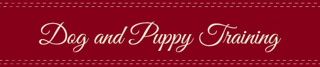 Dog and Puppy Training Articles