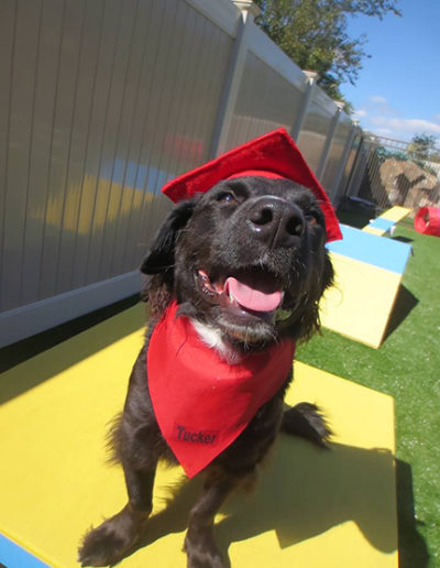 Dog-training-graduation-10370819_10152403177508207_5284947987192461954_n2
