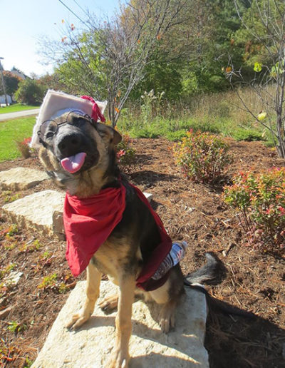 Dog-training-graduation-10393554_10152493047353207_2166022831636956130_n1