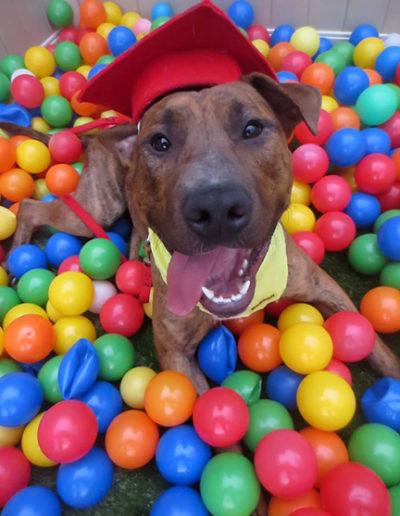Dog-training-graduation-10603290_10152356550253207_4985868206429333135_n1