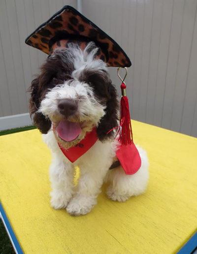 Dog-training-graduation-10649726_10152427120658207_6858903573619455270_n1