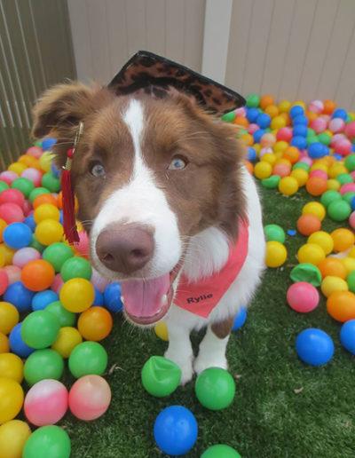 Dog-training-graduation-11222795_10153115625198207_3997970554807741883_n1