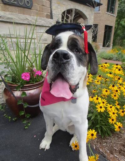 Dog-training-graduation-11990379_10153168651303207_8559158426860883902_n1