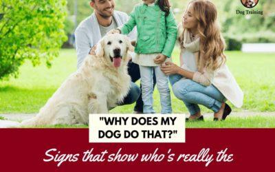 Why Does My Dog Do That? Understanding Herding Behavior