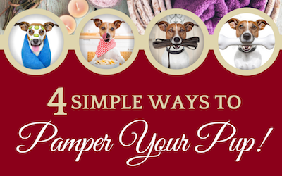 Pampering Your Pup At Home