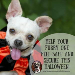 Tricks and Treats:  Tips for a Safe Halloween with Your Dog