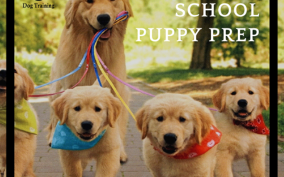 Back To School Puppy Prep List