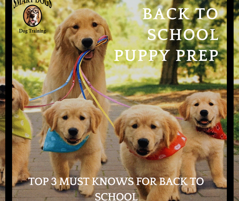 Back to School Puppy Prep