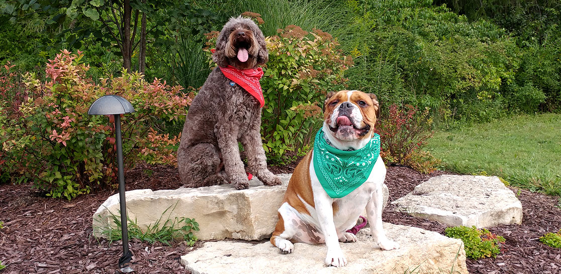 About Smart Dogs Training and Lodging