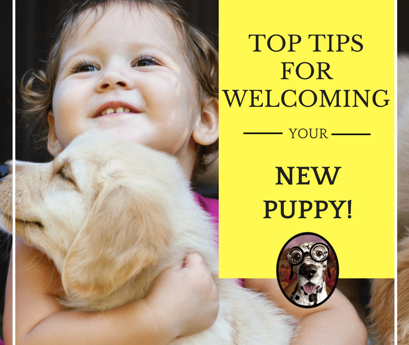 A Peaceful Home:  Strategies for Introducing a New Puppy to Your Family