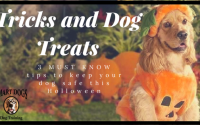 Tricks and Dog Treats