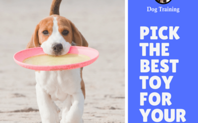 Toys, Toys, Toys – Choosing the Right One For Your Dog