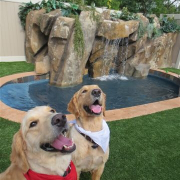 Waterfall Play Area for the Dogs